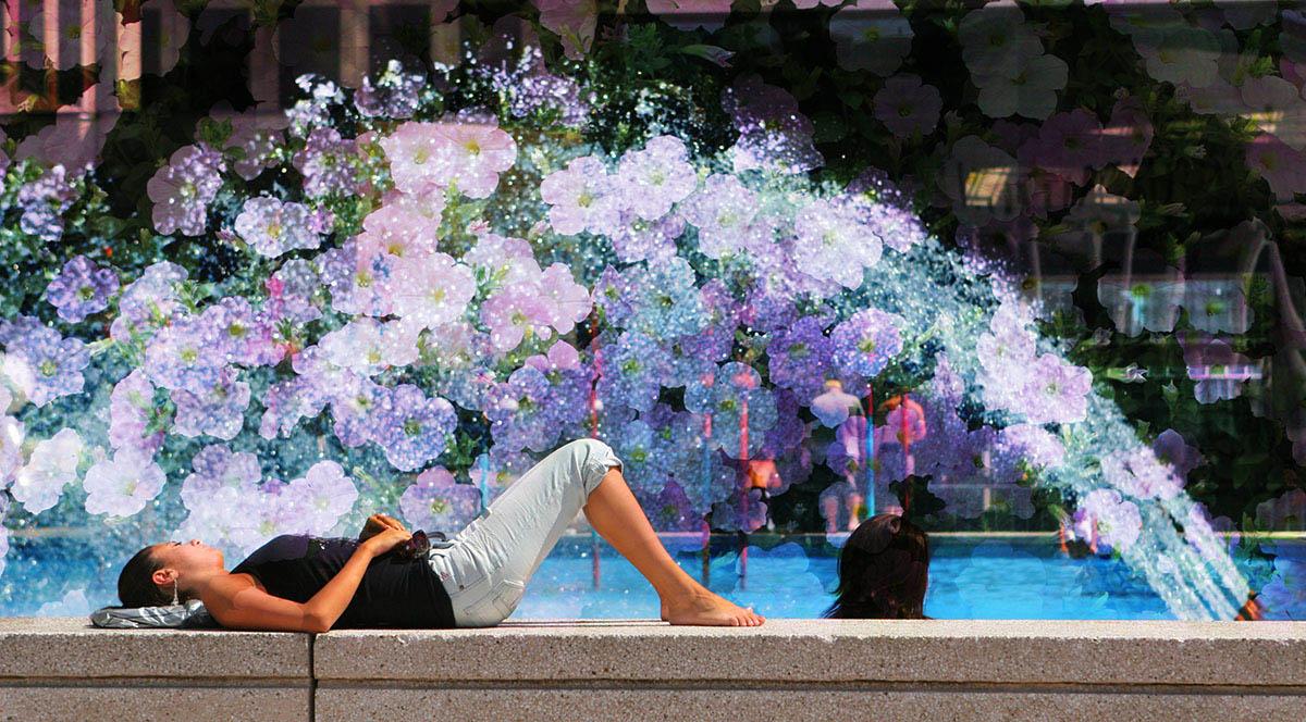 Flowers Splash - Colorful Stock Photos