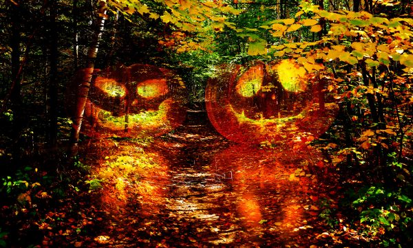 Halloween Scary Wood 1 - Colorful Stock Photos