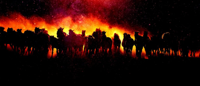 Blazing Group Of Horses Running - Colorful Stock Photos