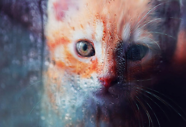 Sad Kitty Cat Stock Photo
